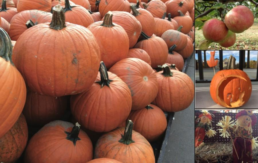 Some traditional fun fall festivities include going to pumpkin patches, apple picking, carving pumpkins, and making scarecrows, as opposed to Black Friday shopping, watching football games or making a non-traditional turkey.