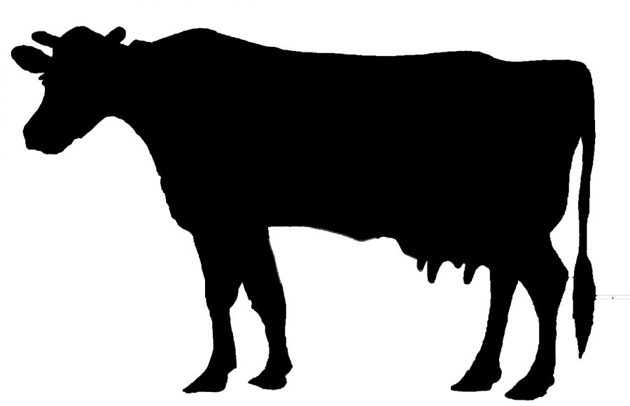 filled in cow