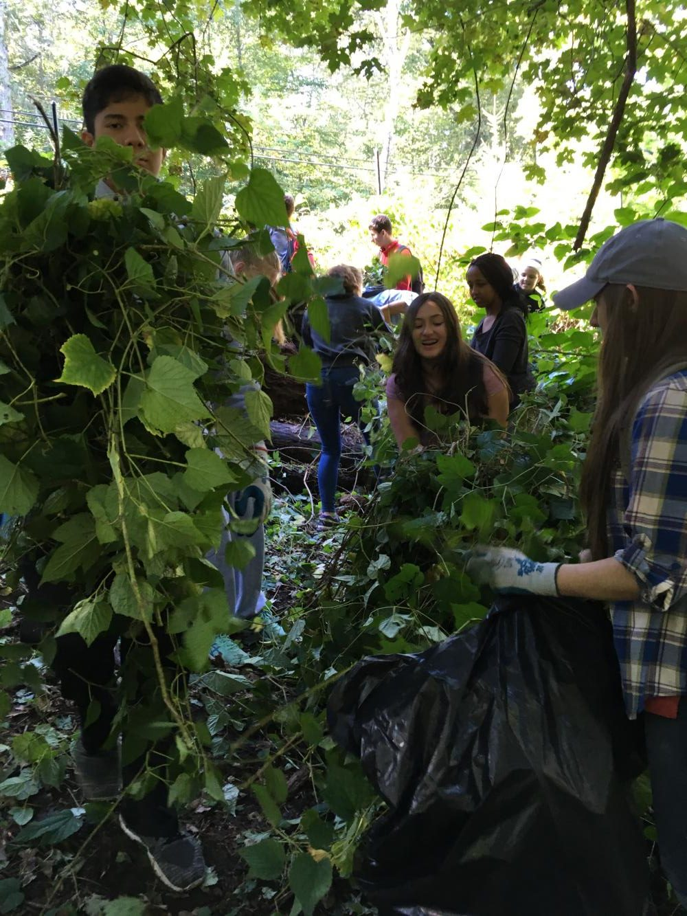 Students at Teatown Reserve remove invasive plants from gardens.